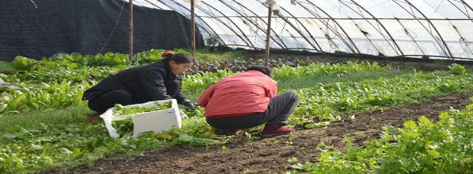 Women Farmers in Rural Areas Have a Difficult Time